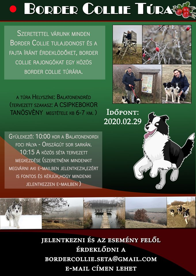 Border collie túra!!!